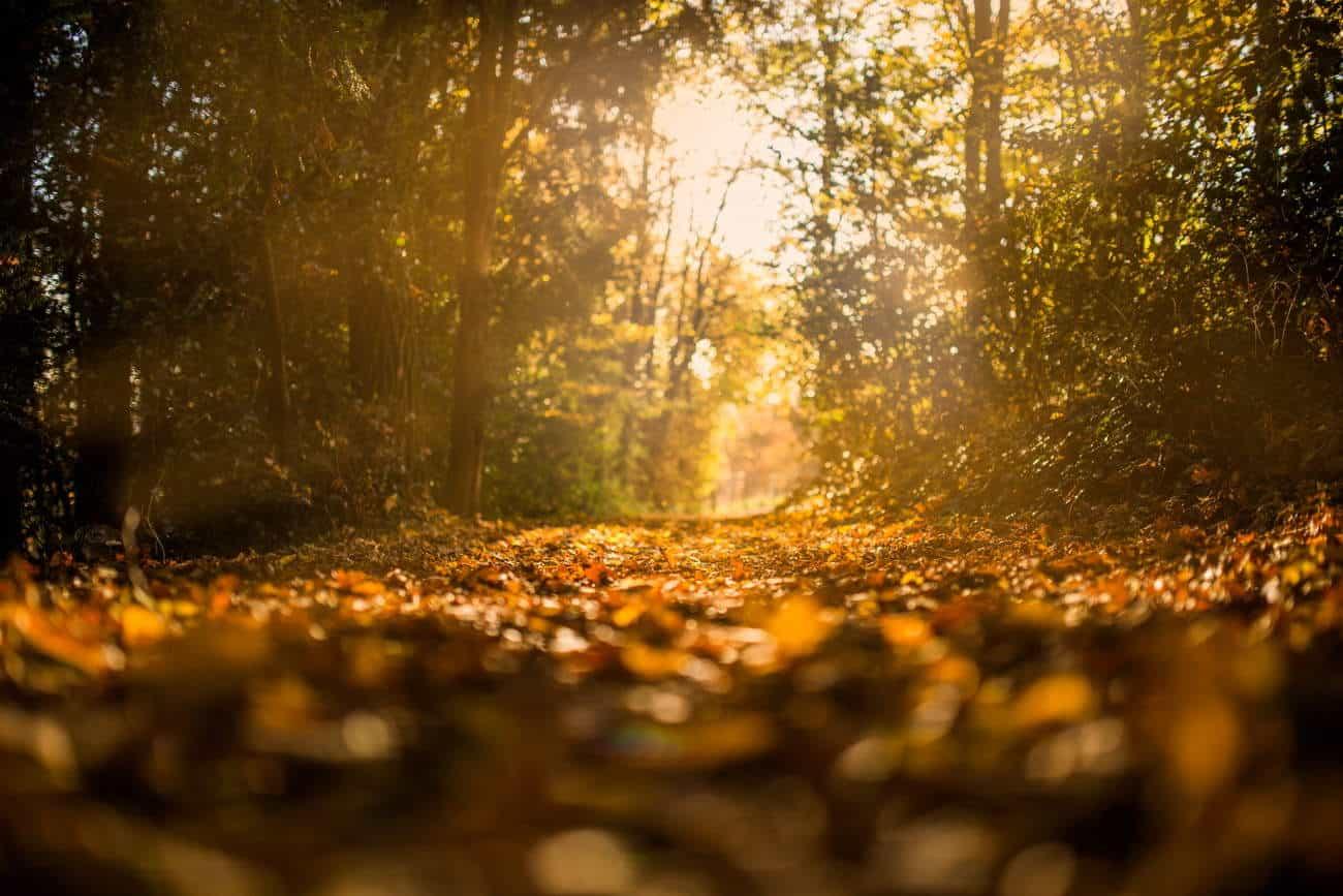 Qu'est-ce que la spiritualité? C'est un outil qui m'aide à revenir à l'important, à mes valeurs de bases