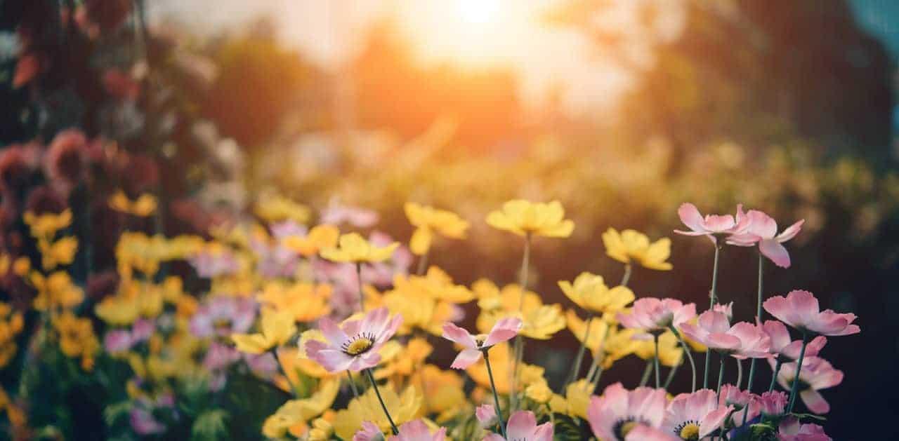 le bonheur est comme un jardin, il a besoin d'entretien